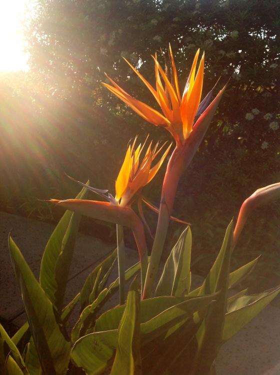Flower_San Diego